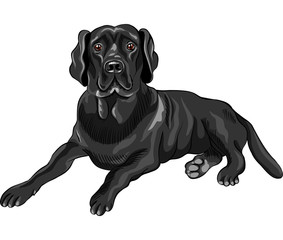 vector sketch dog breed black labrador retrievers