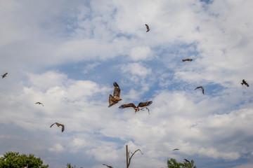 Le Bal des Oiseaux Fantômes du Puy du Fou