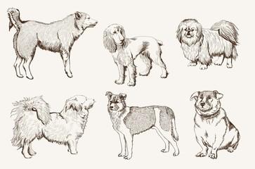 home pet dog