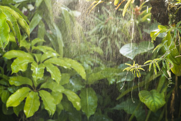 Wall Mural - green tropical background rainforest