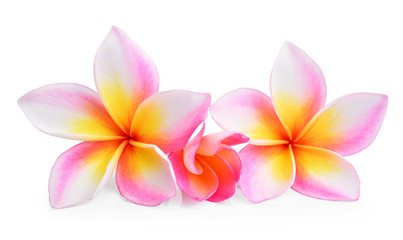 Tropical flower frangipani (plumeria) isolated on white backgrou