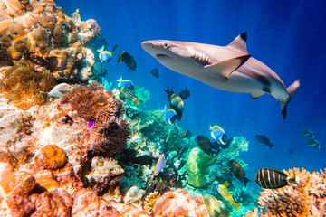 Tuinposter Onder water Tropical Coral Reef.