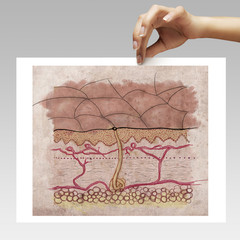 woman holding picture of a skin structure