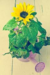 retro style sunflower in pot