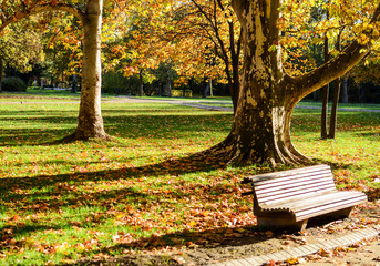 Autumn forest and empty bench in park