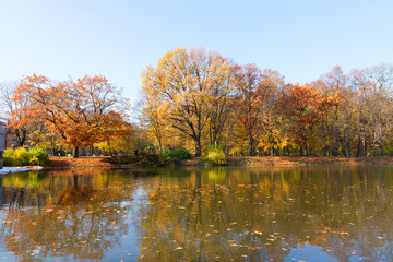 autumn park with trees over water