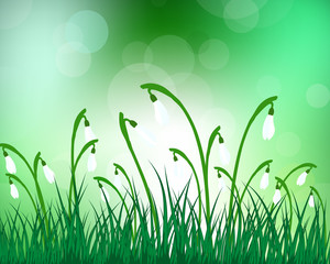 Summer meadow background with snowdrops
