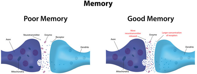 Memory Potentiation and Depression Wall mural