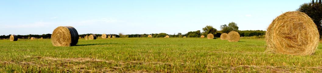 Stroh Heu Weizen Ernte Panorama Landschaft