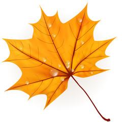 Autumn leaf isolated on white. plus EPS10