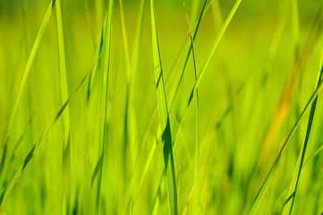 green grass in sun summer sunlight on blur backgrounds