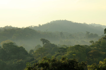 Rainforest Morning Mist, Drake Bay, Costa Rica