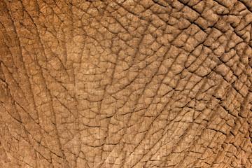 Wall Mural - Elephant Skin