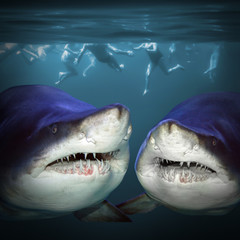 Two sharks have a fun.