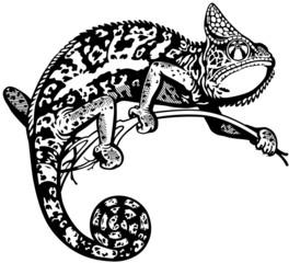 chameleon black white