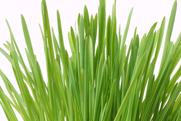 Green grass. Isolated on white.