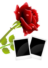 red rose and two photos with a black background