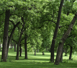 Walnut tree grove