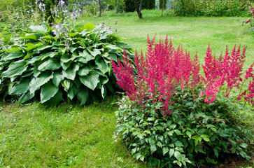Pink Astilbe (False Spirea), Copy Space, Horizontal