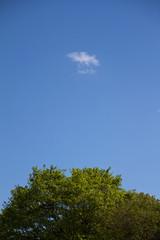 Kleine Wolke über Baumkrone