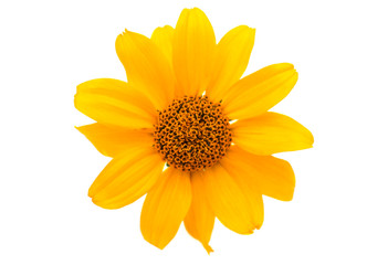 yellow flower isolated