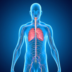 Body with lungs