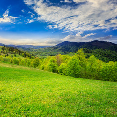 green grass on hillside meadow in mountain