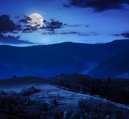pine trees near valley in mountains  on hillside at night