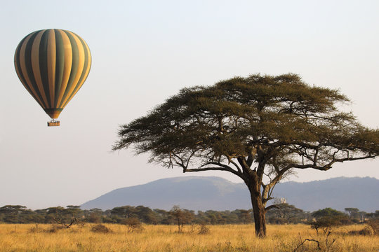 Flying green and yellow balloon near an acacia tree