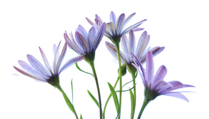 Beautiful flowers, isolated on white