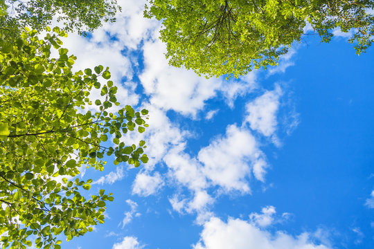 Beautiful blue sky with white clouds and green leaves looking up
