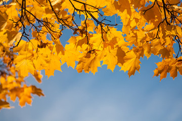 Autumn leaf in sky.