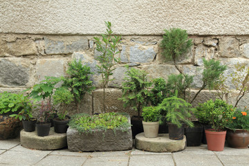 set of bonsai plants and trees