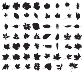 Half Hundred Foliage Silhouettes