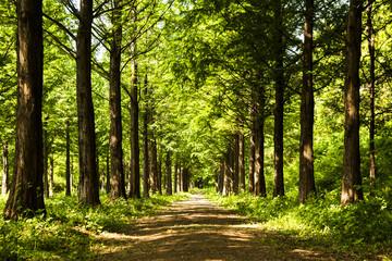 Lighting Tree Trail