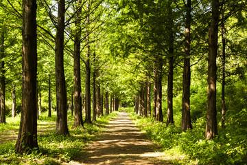 Photo sur Aluminium Bestsellers Lighting Tree Trail