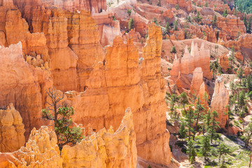 Wall Mural - Bryce Canyon