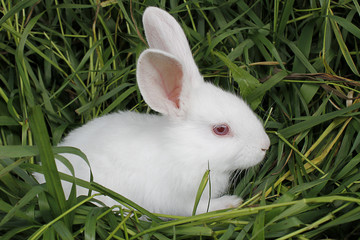 Rabbit sits on the mown grass .