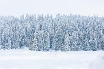 Verschneiter Winter-Wald