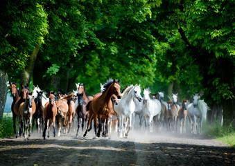 Runing horses