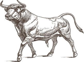 bull Wall mural