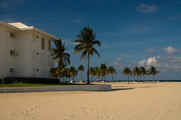 Beach, Strand, Palmen, Gruppe, Florida, Amerika,