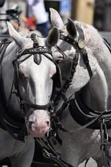 Horses.