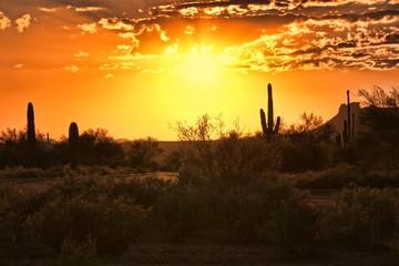 Fototapete - Beautiful sunset view of the Arizona desert with cacti
