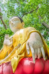 buddha  sculpture under the big green tree