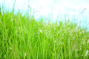 Green grass near lake