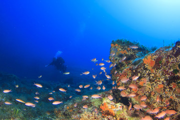 Scuba Diving Mediterranean Sea