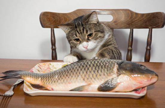 Cat and a big fish