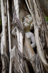 statue of person trapped in banyon tree