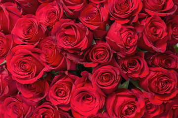 Foto auf Leinwand Roses Colorful flower bouquet from red roses for use as background.
